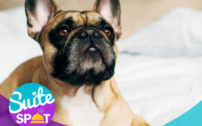 37 – Marketing Your Pet-Friendly Hotel